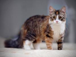 flerfärgad katt foto