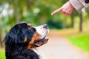 kvinna utbildning med hund sit kommando foto