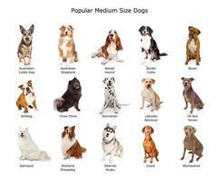 samling av populära medelstora hundar foto