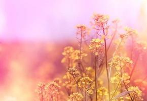gula blommor (vild blomma) foto