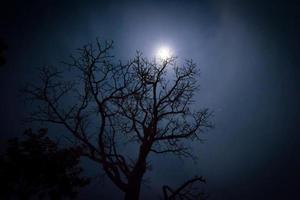 döda träd foto