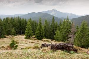 bergen foto