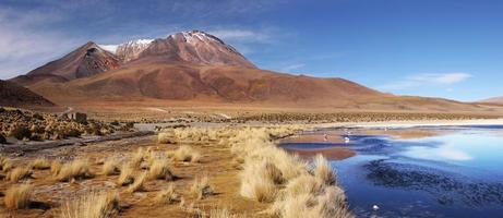 altiplano och licancabur berg foto