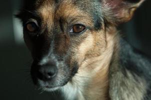hund foto