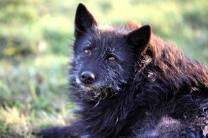 gammal hund foto