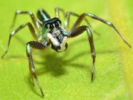 spindel i naturen foto