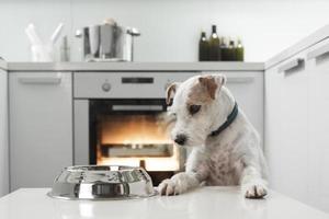 hund väntar på en hälsosam måltid foto