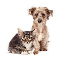 terrier blandad valp och tabby kattunge foto