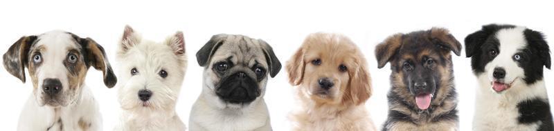 rad med olika valpar, hundar foto