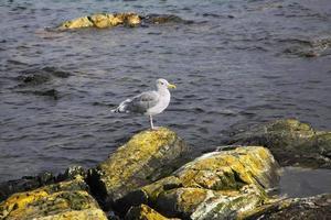 havsfågel foto