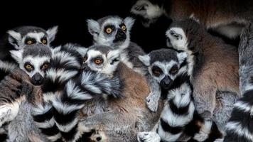 meerkats! foto