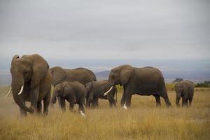 gruppfoto av elefanter foto