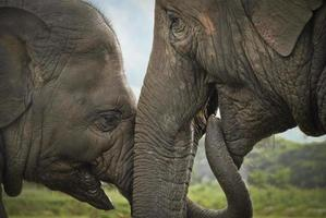 intimt ögonblick mellan mamma och baby elefant