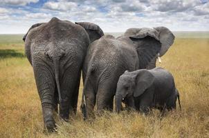 elefantfamilj foto