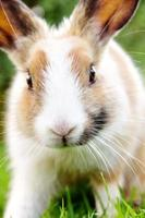 söt kanin kanin på gräset