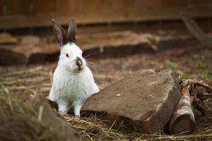 rolig söt kanin utomhus