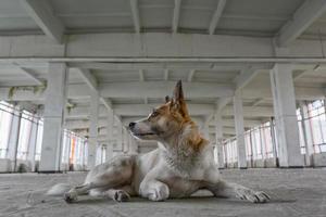 porträtt av herrelös hund foto