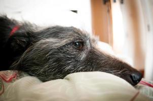 avkopplande hund foto