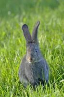 liten kanin på gräset foto