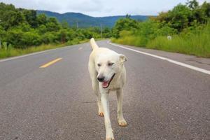 herrelös hund som står mitt på en motorväg foto