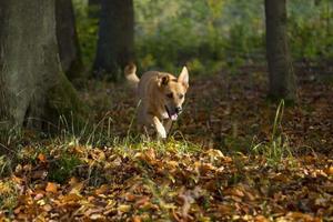 hund i seinem element foto