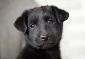valp hund foto