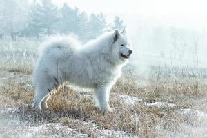 vit hund foto