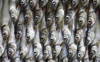 färsk havsfisk foto