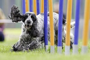 hund sport foto