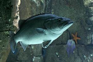 fisk foto