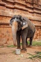elefant i hinduiska templet foto
