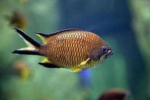 exotiska fiskar foto