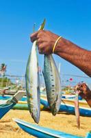 fångst av fisk foto