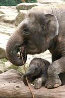 mor och barn elefant