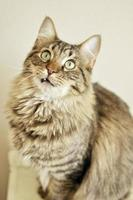 fånig tandad katt foto