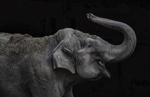 elefant spelar foto