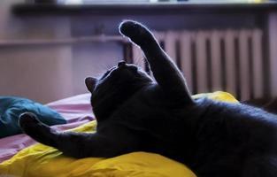 silhuett av katt liggande foto