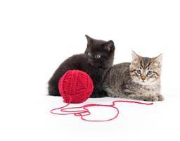 två söta kattungar och rött garn foto