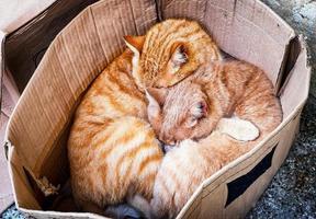 katter foto