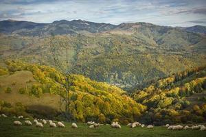 vackra bergslandskap på hösten foto
