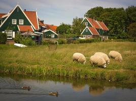 pastoral scen i nederländska landsbygden foto
