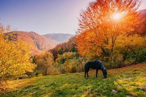 häst som betar på ängen foto