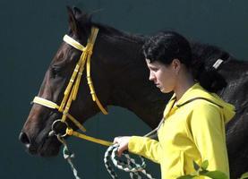ung flicka med häst foto