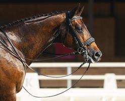 hästsport - porträtt av avkopplingshäst foto