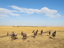 flock topis foto