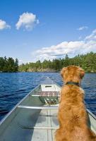 hund och hans kanot foto