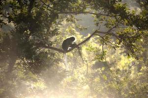 apa sitter ett träd på solen på morgonen. foto