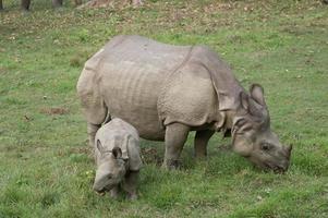 mor och baby noshörning foto
