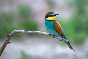 exotisk tropisk fågel foto