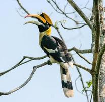 fågel i naturen